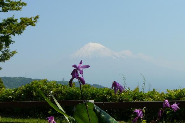 fujigawa120519_2.jpg