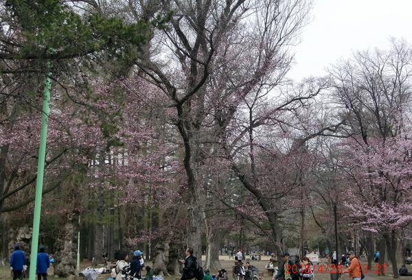 maruyamakouen20180428_2.jpg