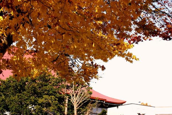 oomomiji141026.jpg